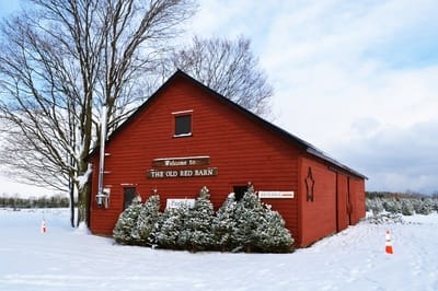 Old Red Barn EVERGREEN VIEW FARM Christmas trees